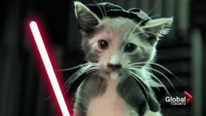 The 'Just for Cats' film festival features the most hilarious videos from the web