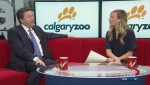 The winner of the Calgary Zoo's Canada's Greatest Animal contest