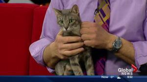 Edmonton Humane Society: Nala and Midge