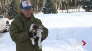 Alberta man saves dog from cougar attack