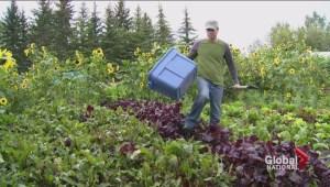 One Calgary company's generous harvest