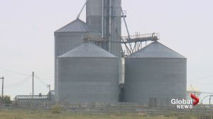 Westerns Feedlots say political and economic environment reason for shut down
