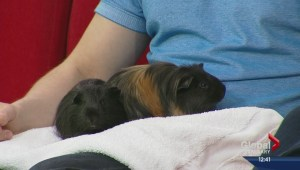 Pet of the Week: Jack and Oscar