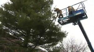 Iconic tree lights up Dorval neighbourhood