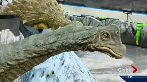 Age old dinosaurs set to entertain scores of youth