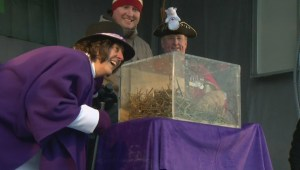 Wiarton Willie bucks trend, predicts early spring