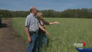 Farmers overtaken by hail damage