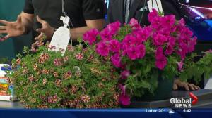 Gardening in Edmonton: Hanging baskets 101