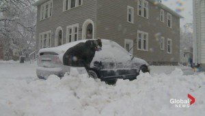 Moncton residents battle large snowfall