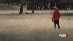 Truly Canadian: Mountie wearing iconic red serge chases bear