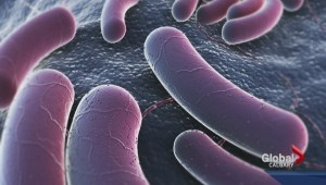Alberta pork linked to E. coli cases