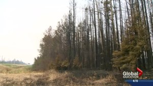 No. 1 top story of 2015: Northern Sask. wildfires
