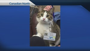 Meow Meow the cat becomes internet sensation