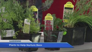 Garden plants to grow to help bees succeed