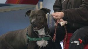 Adopt a Pet: Denzel
