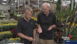 Gardening: Drip irrigation systems
