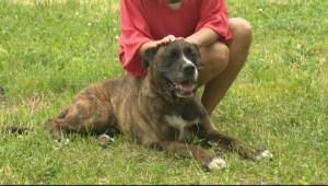 Adopt a Pet: Jun 24