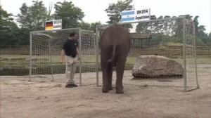 Elephant predicts Argentina will defeat Germany in World Cup final