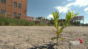 The landscape of Côte-des-Neiges could be about to change