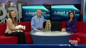Edmonton Humane Society and Len Rhodes