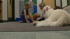 Calgary kids say goodbye to retiring reading dog