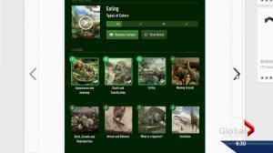Dino 101 course as an app
