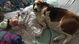 Family basset hounds refuse to leave hospital bed of infant who died after a stroke