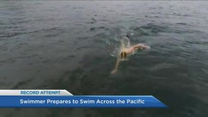 Endurance swimmer prepares to cross Pacific Ocean to raise awareness