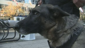 New rules for police K9 dogs
