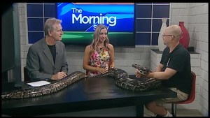 Getting to know you: there's a burmese python on the table!
