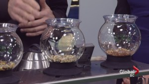 Saturday Sips: Herbal Tea