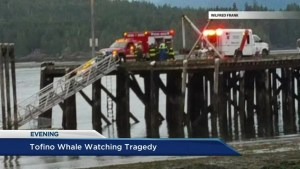 Whale watching accident: Analyzing the investigation