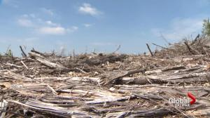 Provincial clear cutting targets 'abandoned' advocates say