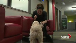 The benefits of bringing your dog to work