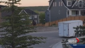 Moose on the loose in Scenic Acres