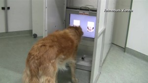Study shows dogs can distinguish between angry and happy human faces