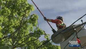 Open House: Look out for power lines while pruning trees