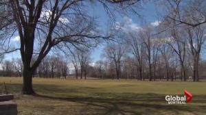 Dorval residents upset after trees felled at golf course