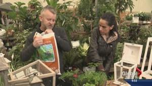 Gardening: Lantern Planters