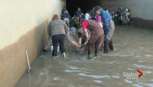 Family saves fish from irrigation canals for 25 years