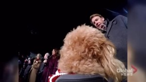 Global News Toronto Toy Drive Live with Storm the Weather Dog