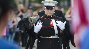 Marine dog with cancer given a hero's farewell