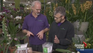 Gardening: Orchid Care
