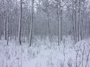 Saskatoon weather outlook: winter returned to Sask. Easter weekend