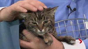 Adopt a pet: Annie the cat, Addison the hamster