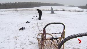 NB dog sledding tour company loses business due to a lack of snow