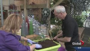 Gardening: Tomato Potato Plant