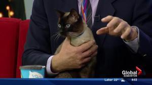 Edmonton Humane Society: Charlie and Cobra
