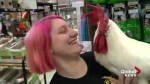 Calgary pet store celebrates Year of the Rooster