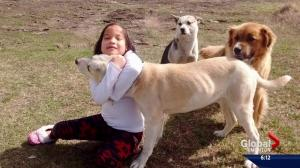 Girl says dogs protected her when she got lost in northern Alberta